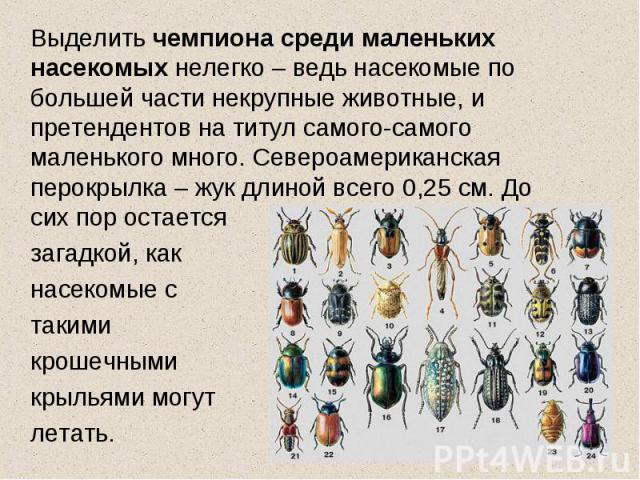 Выделить чемпиона среди маленьких насекомых нелегко – ведь насекомые по большей части некрупные животные, и претендентов на титул самого-самого маленького много. Североамериканская перокрылка – жук длиной всего 0,25 см. До сих пор остается загадкой,…