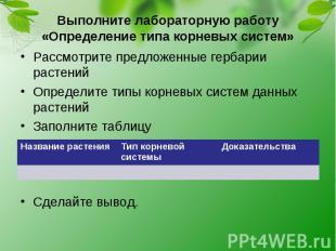 Выполните лабораторную работу «Определение типа корневых систем»Рассмотрите пред
