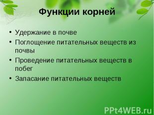 Функции корней Удержание в почве Поглощение питательных веществ из почвы Проведе