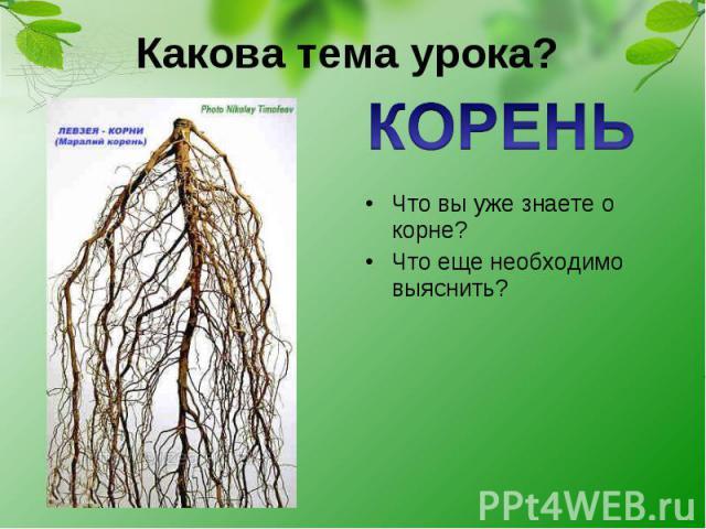 Какова тема урока? КОРЕНЬ Что вы уже знаете о корне? Что еще необходимо выяснить?