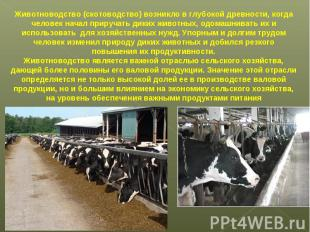 Животноводство (скотоводство) возникло в глубокой древности, когда человек начал