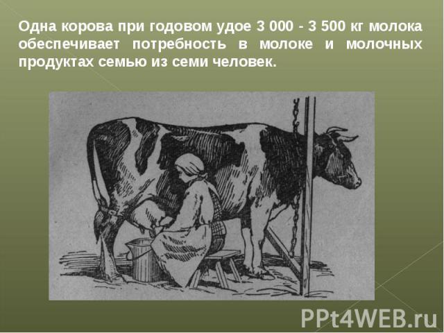 Одна корова при годовом удое 3 000 - 3 500 кг молока обеспечивает потребность в молоке и молочных продуктах семью из семи человек.
