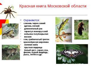 Красная книга Московской области Охраняются: слизень черно-синий щитень летний д