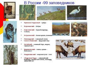 В России -99 заповедников Приокско-Террасный – зубры Воронежский - бобры Баргузи