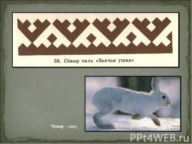 Чевар - заяц