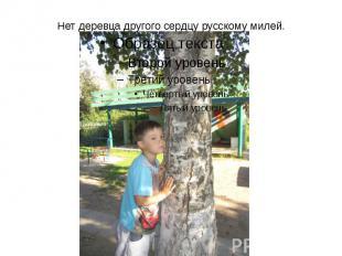 Нет деревца другого сердцу русскому милей.