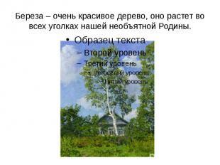 Береза – очень красивое дерево, оно растет во всех уголках нашей необъятной Роди