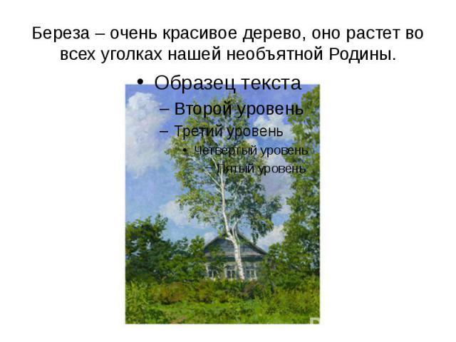 Береза – очень красивое дерево, оно растет во всех уголках нашей необъятной Родины.