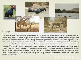 Фауна Фауна У Нігері мешкає безліч комах, великої шкоди господарству приносять м