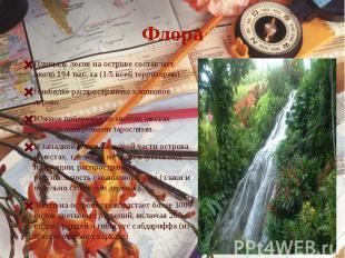 ФлораПлощадь лесов на острове составляет около 194 тыс. га (1/5 всей территории)