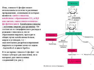 Итак, глюкозо-6-фосфат может использоваться в клетке в различных превращениях, о