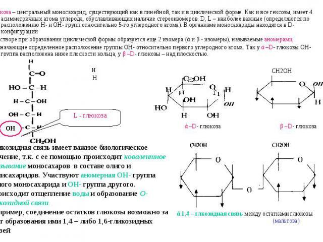Глюкоза – центральный моносахарид, существующий как в линейной, так и в циклической форме. Как и все гексозы, имеет 4 асимметричных атома углерода, обуславливающих наличие стереоизомеров. D, L – наиболее важные (определяются по расположению Н- и ОН-…