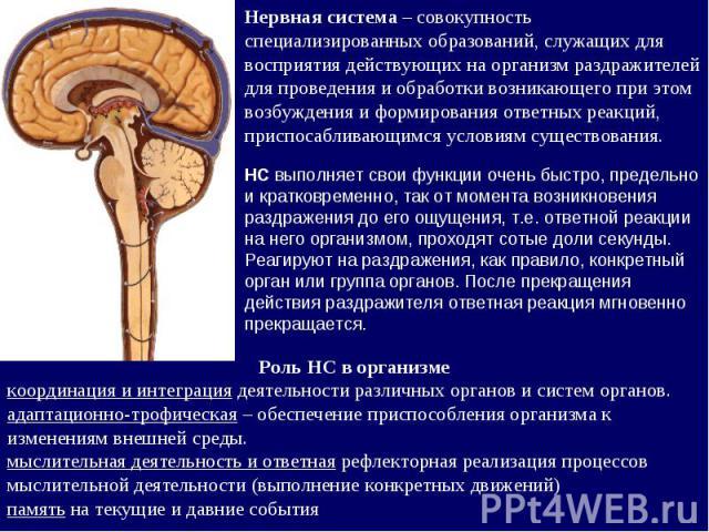 Нервная система – совокупность специализированных образований, служащих для восприятия действующих на организм раздражителей для проведения и обработки возникающего при этом возбуждения и формирования ответных реакций, приспосабливающимся условиям с…