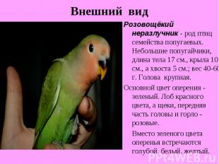 Внешний видРозовощёкий неразлучник - род птиц семейства попугаевых. Небольшие по