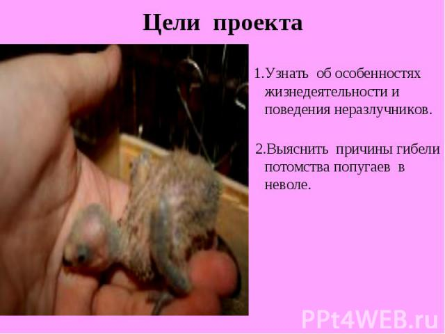 1.Узнать об особенностях жизнедеятельности и поведения неразлучников. 2.Выяснить причины гибели потомства попугаев в неволе.