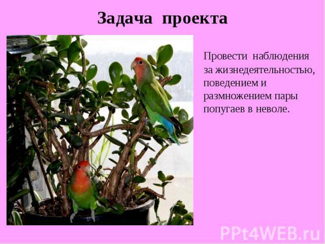Задача проектаПровести наблюдения за жизнедеятельностью, поведением и размножением пары попугаев в неволе.