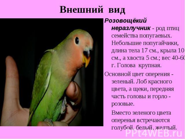 Внешний видРозовощёкий неразлучник - род птиц семейства попугаевых. Небольшие попугайчики, длина тела 17 см., крыла 10 см., а хвоста 5 см.; вес 40-60 г. Голова крупная. Основной цвет оперения - зеленый. Лоб красного цвета, а щеки, передняя часть гол…