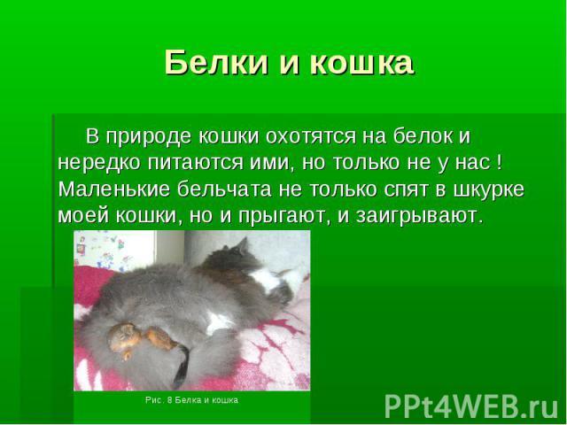 Белки и кошкаВ природе кошки охотятся на белок и нередко питаются ими, но только не у нас ! Маленькие бельчата не только спят в шкурке моей кошки, но и прыгают, и заигрывают.