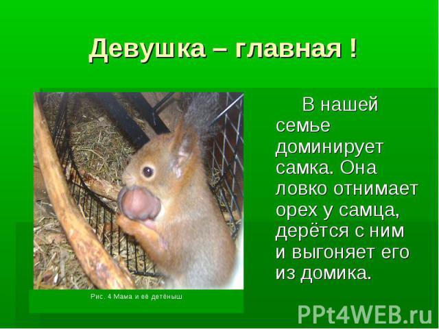 Девушка – главная !В нашей семье доминирует самка. Она ловко отнимает орех у самца, дерётся с ним и выгоняет его из домика.