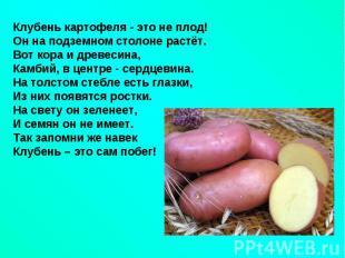 Клубень картофеля - это не плод!Он на подземном столоне растёт.Вот кора и древес
