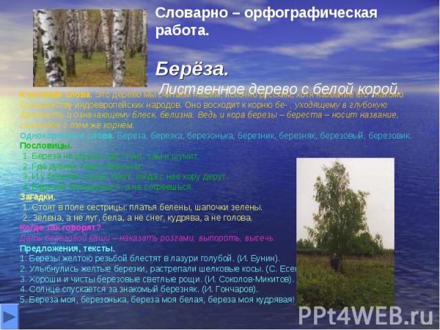 Словарно – орфографическая работа. Берёза. Лиственное дерево с белой корой. К истокам слова. Это дерево мы считаем нашим, исконно русским, хотя название его знакомо большинству индоевропейских народов. Оно восходит к корню бе- , уходящему в глубокую…