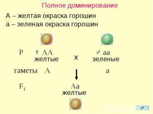 Полное доминирование A – желтая окраска горошин a – зеленая окраска горошин P ♀