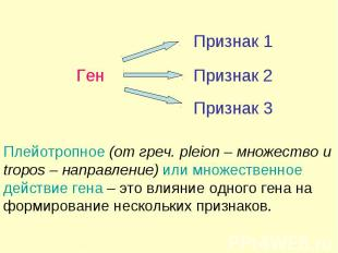 Ген Признак Плейотропное (от греч. pleion – множество и tropos – направление) ил