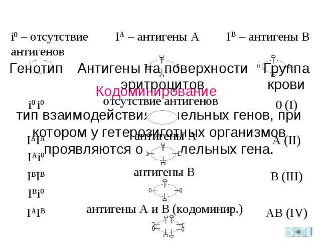 Кодоминирование IA – антигены A IB – антигены B тип взаимодействия аллельных генов, при котором у гетерозиготных организмов проявляются оба аллельных гена. i0 – отсутствие антигенов AB (IV) IAIB B (III) IBIBIBi0 A (II) IAIAIAi0 0 (I) i0 i0 Группа кр…