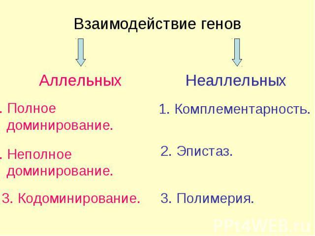 Взаимодействие генов Неаллельных Аллельных 1. Комплементарность. 2. Эпистаз. 3. Полимерия. 1. Полное доминирование. 3. Кодоминирование. 2. Неполное доминирование.