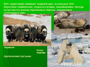 85% территории занимает ледяной щит, остальные 15%-береговое окаймление, покрыто