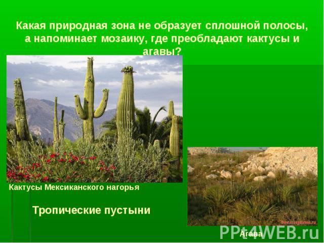 Какая природная зона не образует сплошной полосы, а напоминает мозаику, где преобладают кактусы и агавы? Кактусы Мексиканского нагорья Агава Тропические пустыни