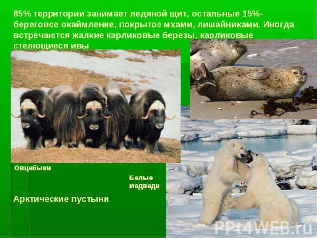 85% территории занимает ледяной щит, остальные 15%-береговое окаймление, покрытое мхами, лишайниками. Иногда встречаются жалкие карликовые березы, карликовые стелющиеся ивы Арктические пустыни Овцебыки Белые медведи