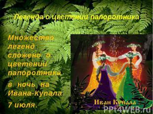 Легенда о цветении папоротникаМножество легенд сложено о цветении папоротника в