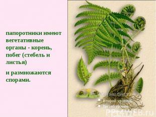 папоротники имеют вегетативные органы - корень, побег (стебель и листья) и размн