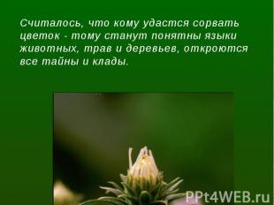 Считалось, что кому удастся сорвать цветок - тому станут понятны языки животных,