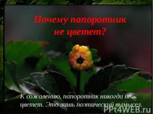 Почему папоротник не цветет?К сожалению, папоротник никогда не цветет. Это лишь