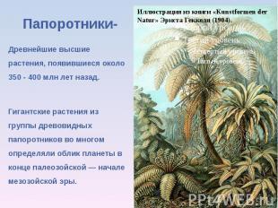 Папоротники-Древнейшие высшие растения, появившиеся около 350 - 400 млн лет наза
