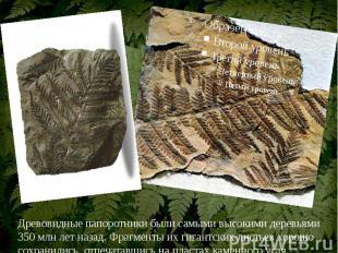 Древовидные папоротники были самыми высокими деревьями 350 млн лет назад. Фрагме
