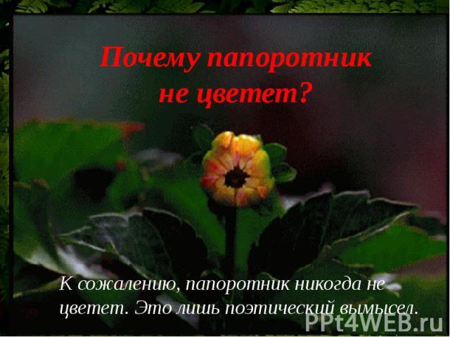 Почему папоротник не цветет?К сожалению, папоротник никогда не цветет. Это лишь поэтический вымысел.
