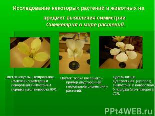 Цветок капусты. Центральная (лучевая) симметрия и поворотная симметрия 4 порядка