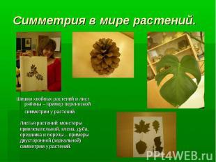 Шишки хвойных растений и лист рябины – пример переносной симметрии у растений. Л