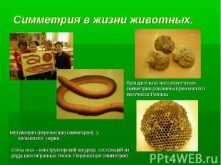 Метамерия (переносная симметрия) у кольчатого червя. Вращательно-поступательная