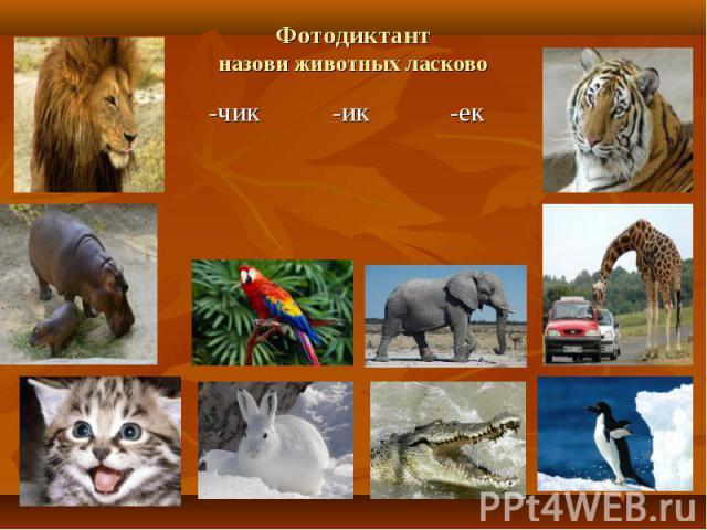 Фотодиктантназови животных ласково