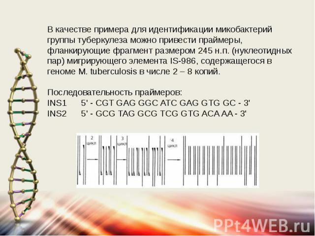 В качестве примера для идентификации микобактерий группы туберкулеза можно привести праймеры, фланкирующие фрагмент размером 245 н.п. (нуклеотидных пар) мигрирующего элемента IS-986, содержащегося в геноме M. tuberculosis в числе 2 – 8 копий. После…
