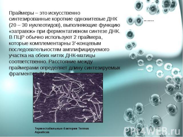 Праймеры – это искусственно синтезированные короткие однонитевые ДНК (20 – 30 нуклеотидов), выполняющие функцию «затравок» при ферментативном синтезе ДНК. В ПЦР обычно используют 2 праймера, которые комплементарны 3'-концевым последовательностям амп…