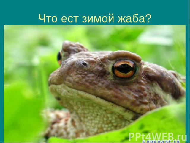 Что ест зимой жаба?