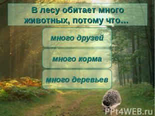 В лесу обитает много животных, потому что… много корма много друзей много деревь