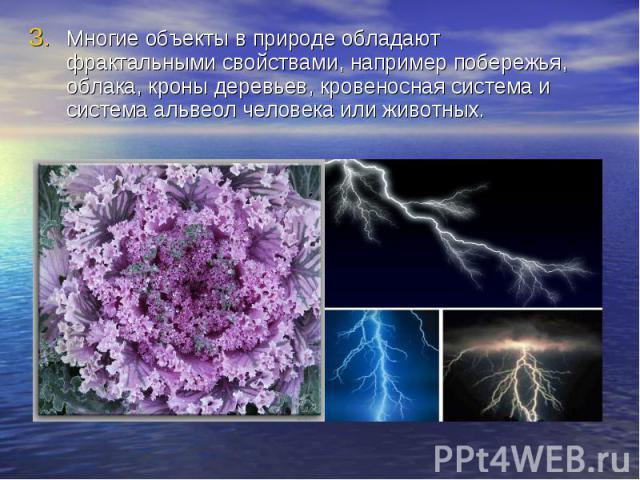 Многие объекты в природе обладают фрактальными свойствами, например побережья, облака, кроны деревьев, кровеносная система и система альвеол человека или животных.