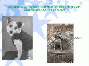 25марта 1961г. Звёздочка и манекен Иван Иванович(имя собаке дал Ю.А.Гагарин)