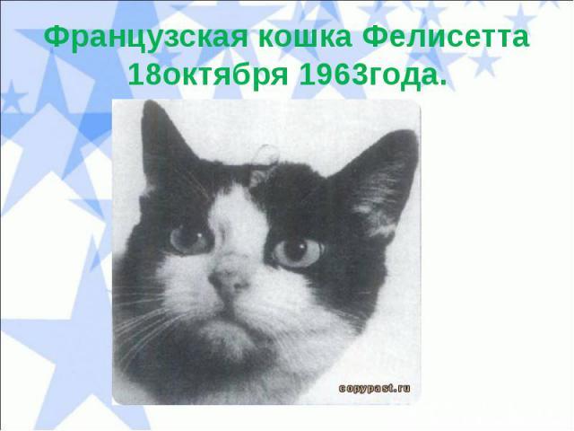 Французская кошка Фелисетта18октября 1963года.
